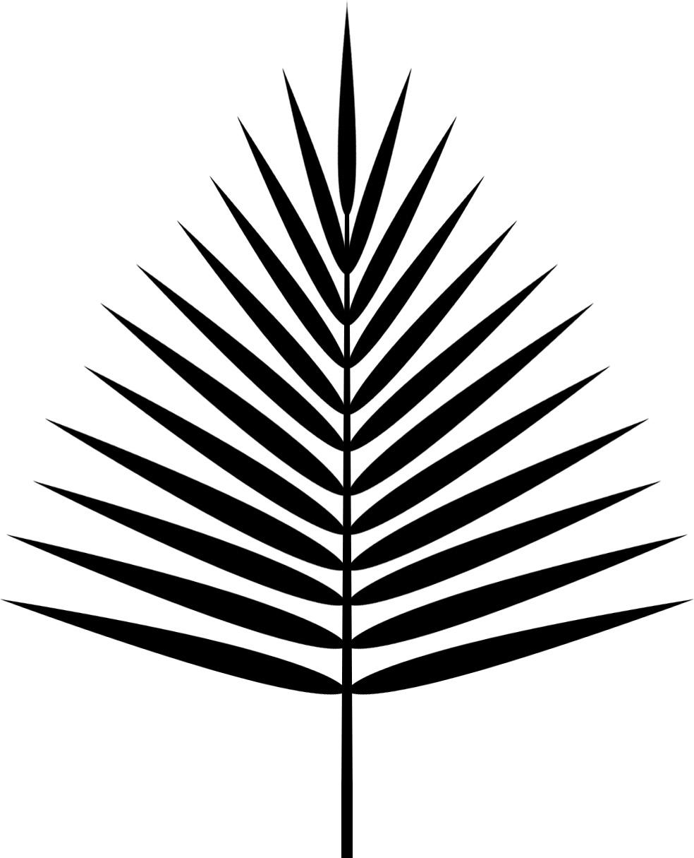 Un palmier en alpha lionel marraud - Palmier dessin ...